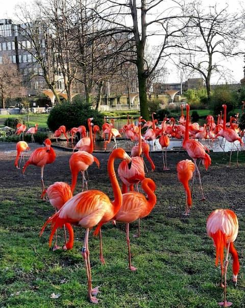 Vườn thú Cologne